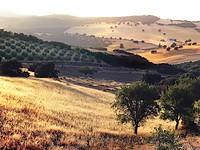 приготовление оливкового масла