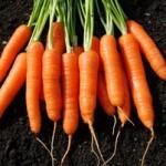 морковь польза и вред