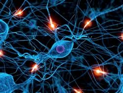 нервная система и дыхание